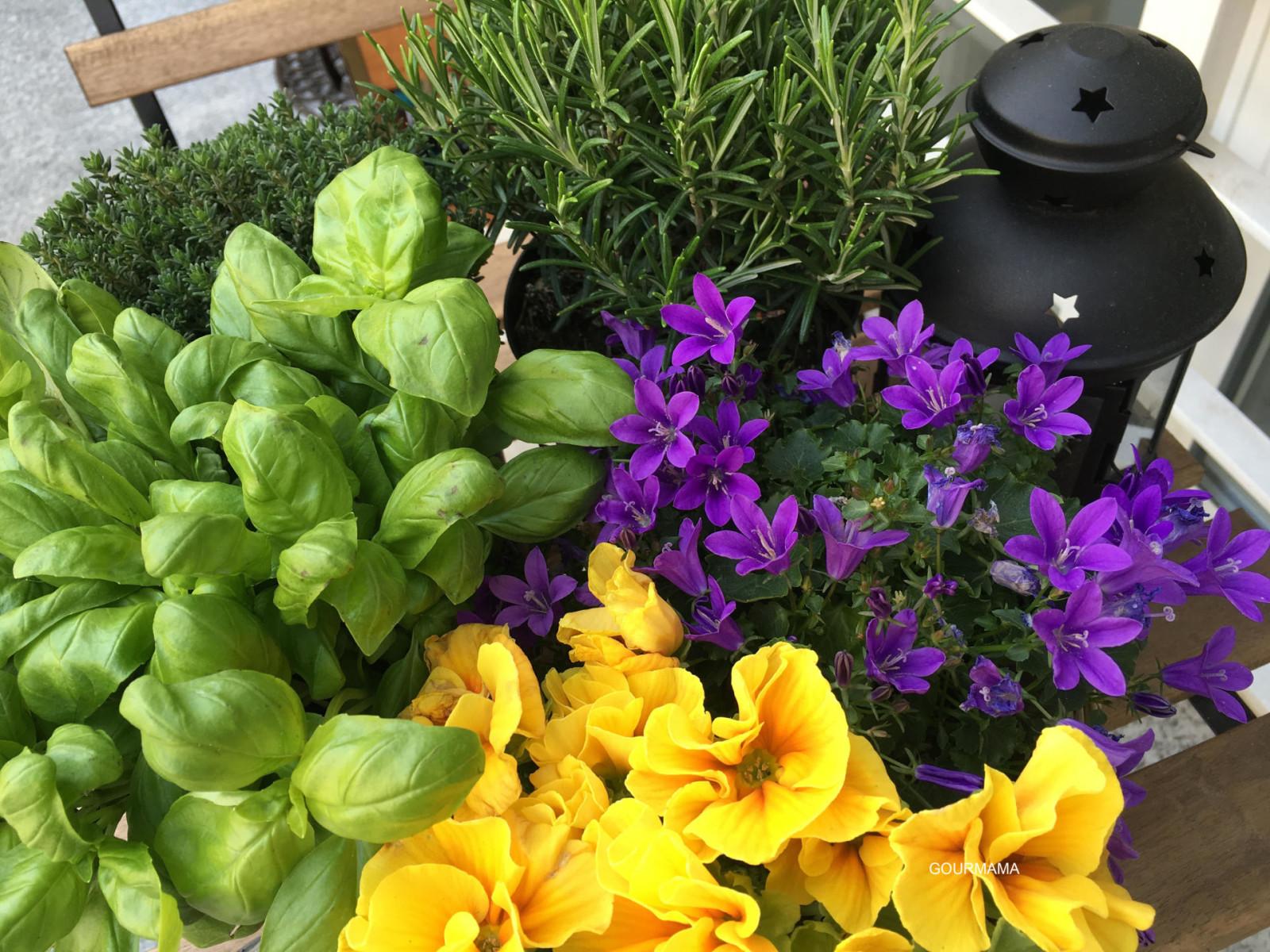 erbe aromatiche e fiori