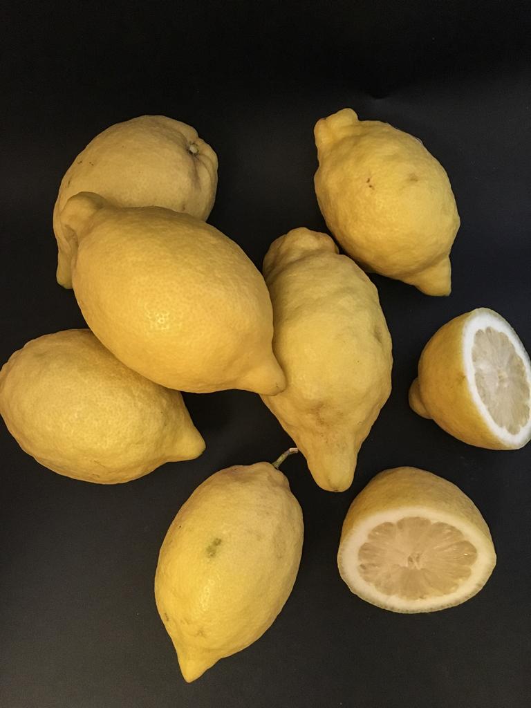 limoncello limoni