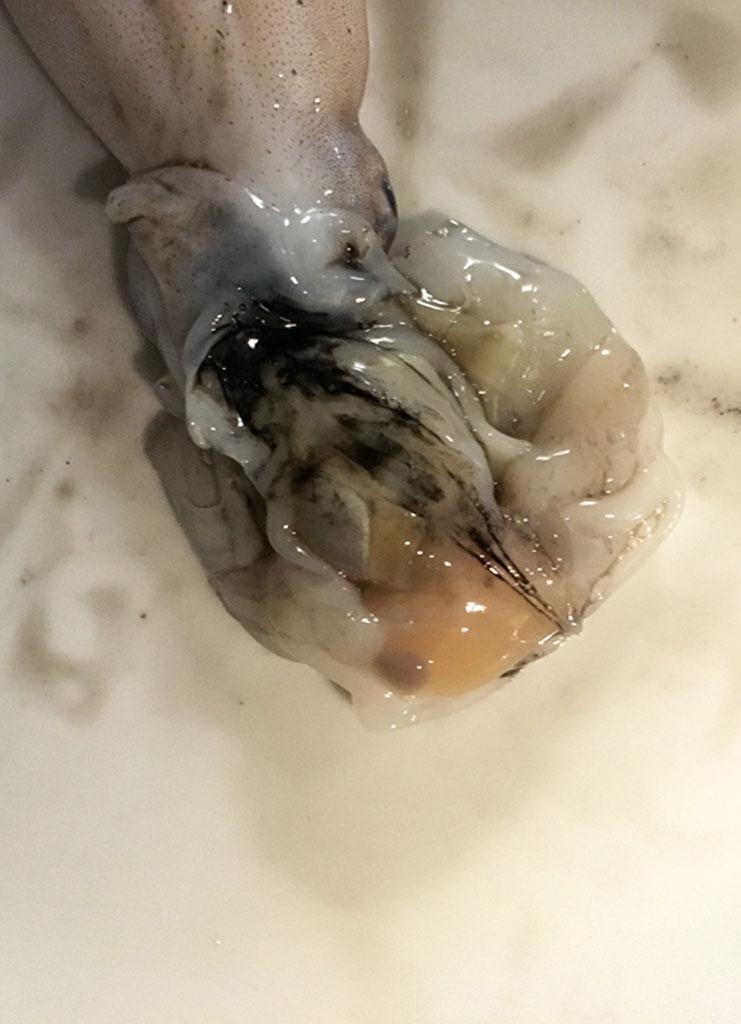 moscardini in umido in scrigni di polenta moscardini 3